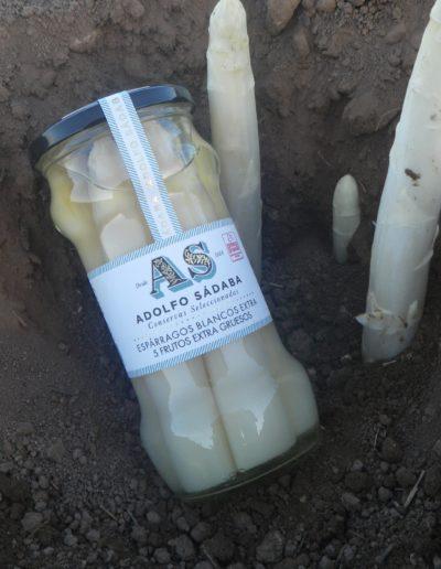 Espárragos Blancos Extra 7-10 frutos Cortos Extra Gruesos